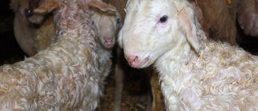 Baby-boom à la ferme Cazaux